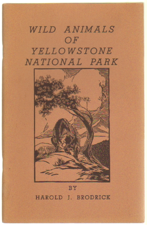 Wild Animals of Yellowstone National Park, A Presentation of General Information on Many of the Mammals Most Commonly Seen in Yellowstone, Illustrated with Drawings of Many of the Species Described. Harold J. Brodrick.