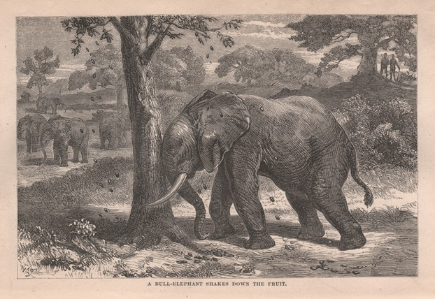 Ismalia, A Narrative of the Expedition to Central Africa for the Suppression of the Slave Trade, Organized by Ismail, Khedive of Egypt. Samuel Baker.
