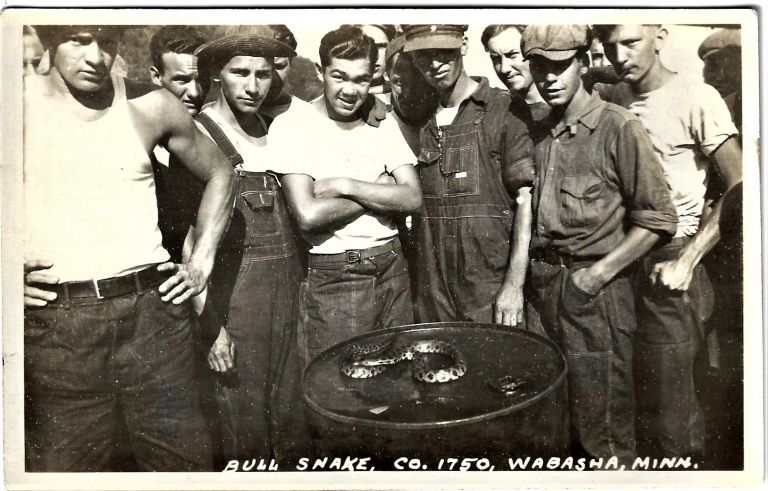 Collection of Real Photo Postcards of a CCC Camp in or near Wabasha, Minnesota. CIVILIAN CONSERVATION CORPS, MINNESOTA.