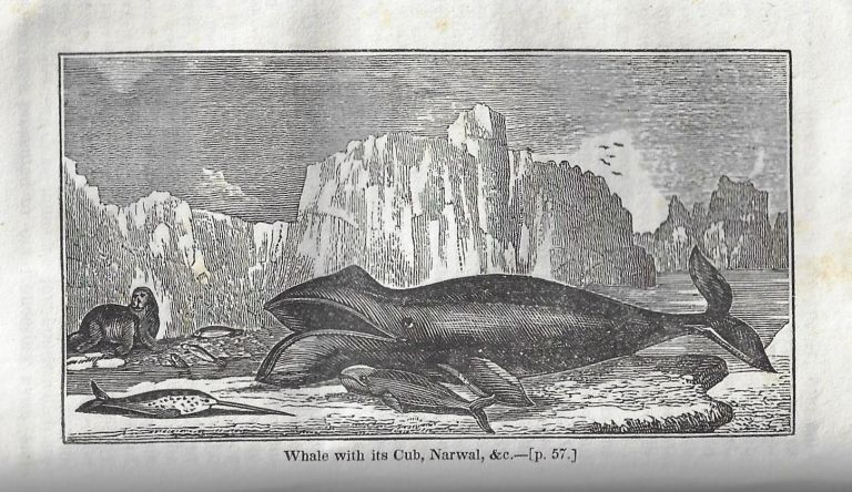 Narrative of Discovery and Adventure in the Polar Seas and Regions: With Illustrations of Their Climate, Geology, and Natural History; and an Account of the Whale-Fishery. Professor Leslie, Professor Jameson, Hugh Murray, Sir John.