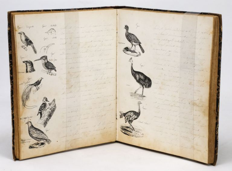 Histoire Naturelle (French Manuscript on Natural History with 86 Hand-Drawn Illustrations, ca. 1840).