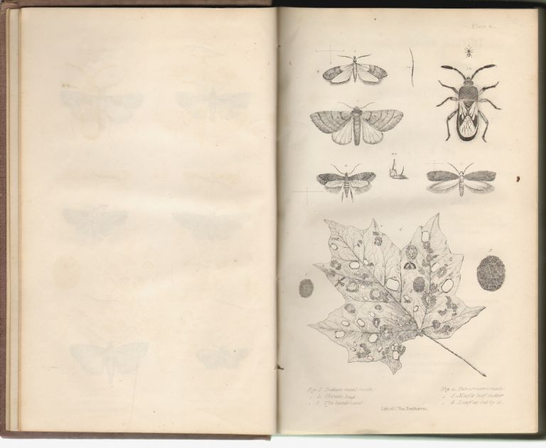 First and Second Report on the Noxious, Beneficial and Other Insects of the State of New-York. Asa Fitch.