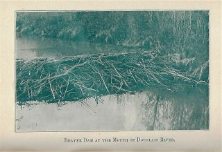 Beavers and their Ways and Other Sketches