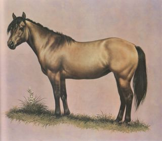The Color of Horses, The Scientific and Authoritative Identification of the Color of the Horse. Ben K. Green, Darol Dickinson, Illustrator.