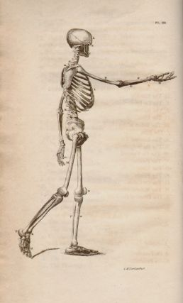 Cheselden's Plates of the Human Bones Correctly reduced from the Original Copy, and Improved with Additional Figures; Accompanied with Concise Explanations for the Use of Students. William Cheselden.