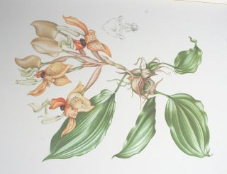 Orchidaceae. Peter Francis Hunt, Mary A. Grierson.