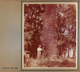 Paraná Pine, An Album of 33 Original Photos of the Logging, Sawmill, and Shipping Operations of M. Lepper & Cia., in Santa Catarina, Brazil