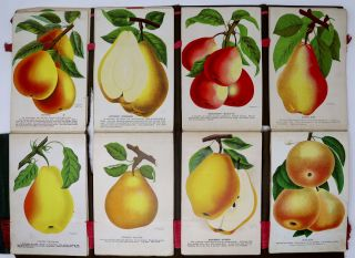 Nursery Salesman's Sample Book Containing 151 Color Plates of Fruit, Flowers, and Trees