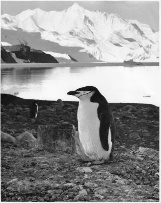 Twenty-Five Photographs from the 1973 U.S. Supply Mission to Antarctica, Operation Deep Freeze '73