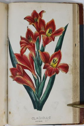 Rare Nurseryman's Sample Book Containing Some of the Earliest Work of an Important Botanical Illustrator, 1872-1875