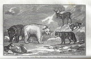 Narrative of Discovery and Adventure in the Polar Seas and Regions: With Illustrations of Their Climate, Geology, and Natural History; and an Account of the Whale-Fishery