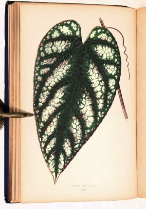 Beautiful Leaved Plants, Being a Description of the Most Beautiful Leaved Plants in Cultivation in this Country; to which is added An Extended Catalogue. With Sixty Coloured Plates