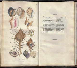 Woodarch's Introduction to the Study of Conchology, Describing the Orders, Genera, and Species of Shells; with Observations on the Nature and Properties of the Animals...Second Edition, Revised and Considerably Enlarged