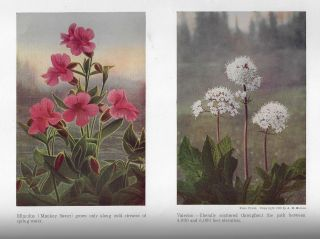 Our Greatest Mountain and Alpine Regions of Wonder (National Park Art Series)