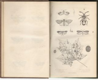 First and Second Report on the Noxious, Beneficial and Other Insects of the State of New-York....