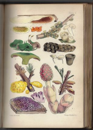 Outlines of British Fungology; Containing Characters of Above a Thousand Species of Fungi, and A Complete List of All That Have Been Described as Natives of the British Isles
